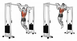 What muscles work with pull-ups