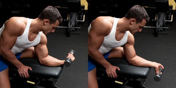 forearm workout